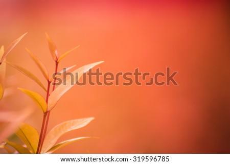 Treetop of Christina leaves - stock photo
