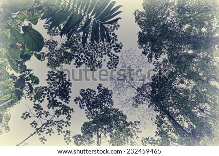 Treetops in tropical Rainforest in Costa Rica - Arenal Volcano National Park, Alajuela province, Costa Rica - stock photo