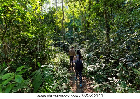 Trekkers walking in the dense jungle of the Cat Ba island, Halong bay, Vietnam - stock photo