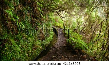trekking footpath in levada Caldeirao Verde, Madeira, Portugal - stock photo