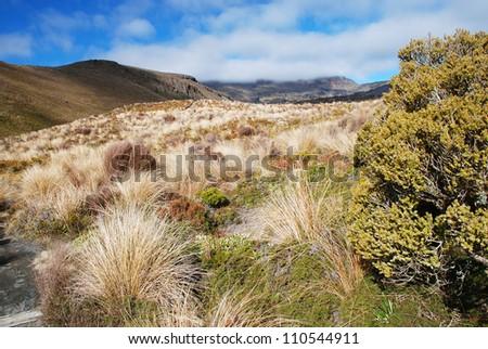 Trekking in Tongariro national park, New Zealand - stock photo