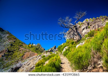 trekking path to the top of Pico Ruivo, Madeira, Portugal - stock photo