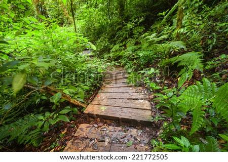 Trekking trail leading through jungle landscape of deep tropical rain forest. Travel background at Doi Inthanon Park, Thailand - stock photo