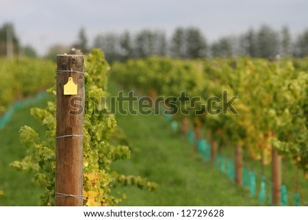 Trellis post in a modern wine vineyard, yellow number tag blanked out. - stock photo