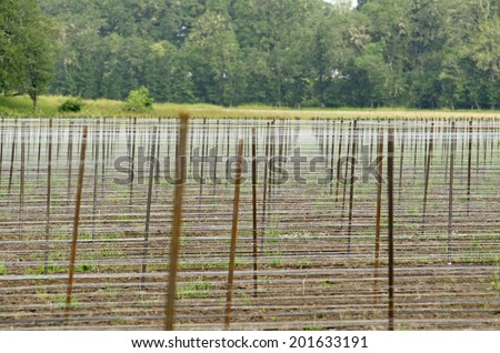 Trellis wire and poles of a new vineyard in the Umpqua Valley in Oregon - stock photo