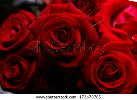 trendy, exciting floral still life, beautiful flowers, bright red roses blooming