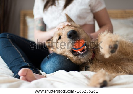 trendy pregnant woman with her pet dog - stock photo