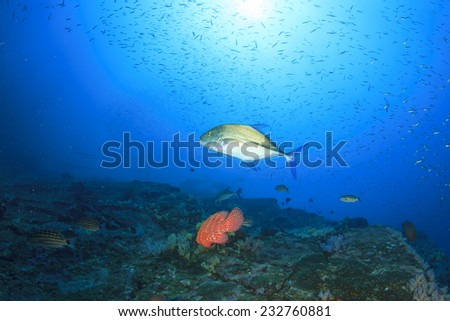 Trevally fish hunting - stock photo