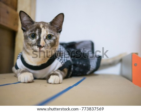 Cats breeds black and white dresses