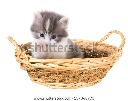 Tri-color washes kitten in a basket isolated on a white background - stock photo