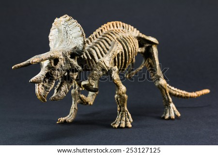 Triceratops fossil dinosaur skeleton model toy on black background - stock photo