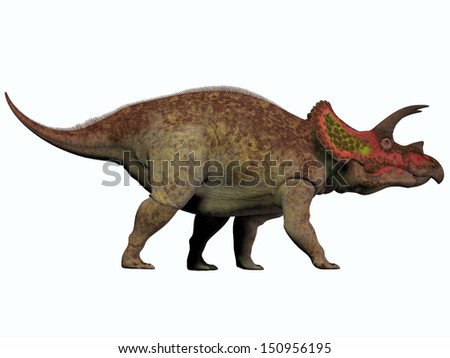 Triceratops on White - Triceratops is a genus of herbivorous dinosaur that lived in North America in the Cretaceous Period. - stock photo