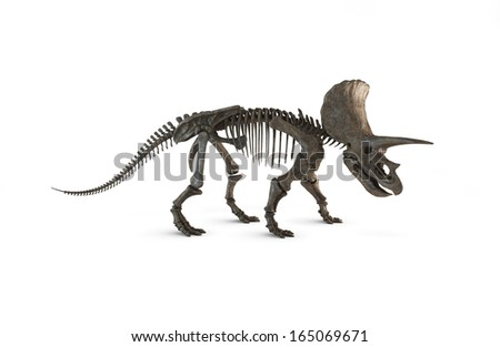 Triceratops Skeleton isolated. Illustration