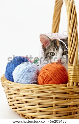 tricolor female kitten in basket playing with balls of whool on white background. Vertical shape, copy space - stock photo
