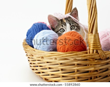 tricolor female kitten playing with ball of whool on pink background. Horizontal shape, copy space - stock photo