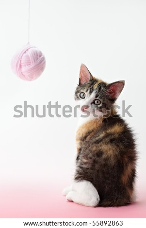tricolor female kitten playing with ball of whool on pink background. Vertical shape, copy space - stock photo