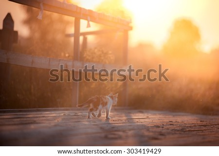 Tricolor kitten in the at sunset - stock photo