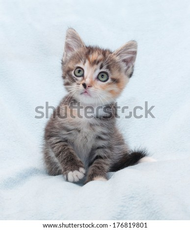 Tricolor striped kitten looking up in surprise - stock photo