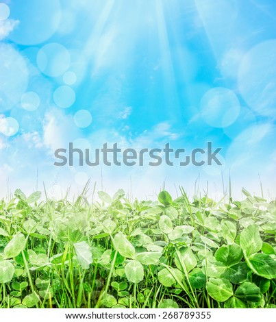Trifolium field over blue sky with sun ray and bokeh, close up, nature background - stock photo