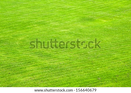 trimmed green lawn, a background - stock photo