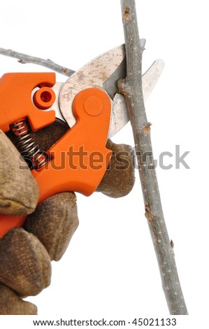 Trimming a Tree Branch with Pruning Shears Isolated on White - stock photo