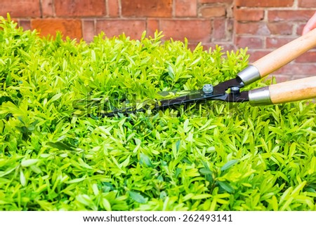 trimming bushes with garden scissors in spring - stock photo