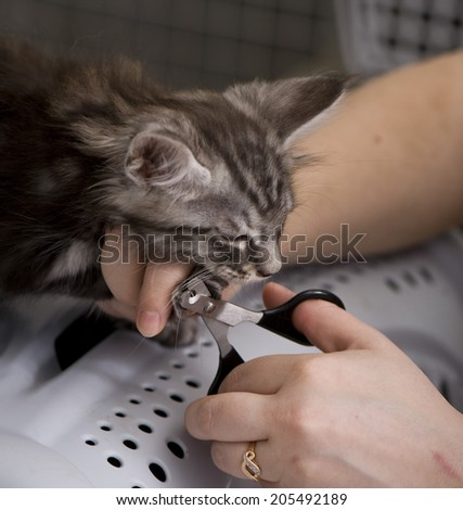 Trimming cat's nails - stock photo