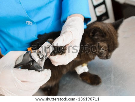 trimming claws of cat in veterinary station - stock photo