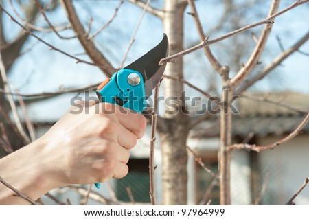 Trimming of trees with secateurs