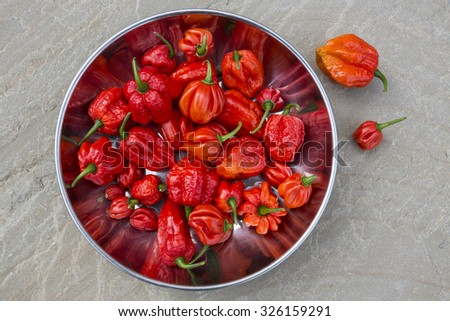 Trinidad Moruga Scorpion  2,009,231 on Scoville scale. AKA Moruga Scorpion, is a rare sought after pepper that was only just recently discovered. Native to the lands of Moruga in Trinidad and Tobago - stock photo