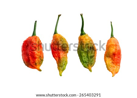 Trinidad Moruga Scorpion Spicy chili in the world  isolated on white background with clipping path. - stock photo