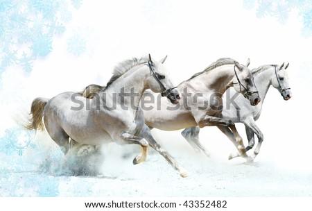 trio of horses in snow - stock photo