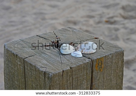 Trio of white sea shells on top of wooden pole - stock photo