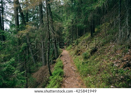 trip in the mountain forest.  Road trek into the mountain Misty green forest for hiking, Travel