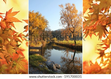 Triple - tranquil brook and autumnal japanese maple leaves - stock photo