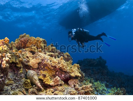 Triton Trumpet and Scuba Diver in  Hawaii