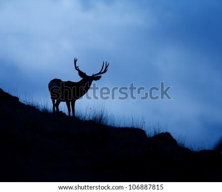 Trophy Mule Deer Buck Silhouetted against blue sky - stock photo