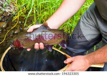 Trophy rainbow trout are common on the Lower Deschutes River in Oregon during the salmonfly hatch. Here a fly fisherman holds his catch.