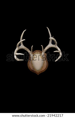 Trophy Whitetail deer antlers mounted on a plaque, isolated in black - stock photo