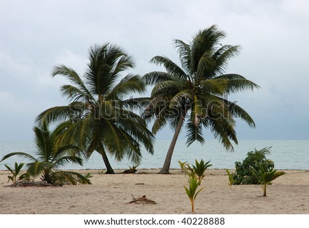 Tropic palms on a sandy beach. Caribbean sea. Belize