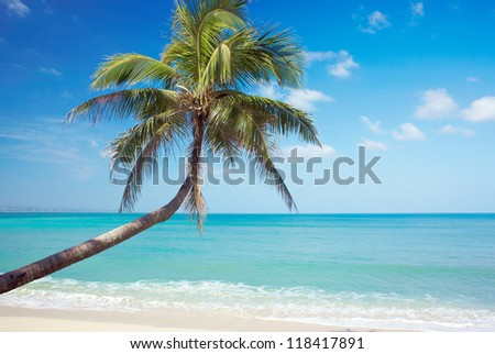 Tropic view on sea cost with palms, sand, and sea. Philippines north