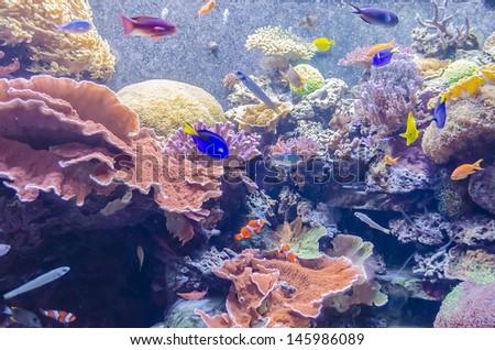 Tropical Aquarium, National Museum of Natural History, Washington DC, USA - stock photo