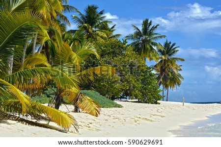 Tropical background, Caribbean island