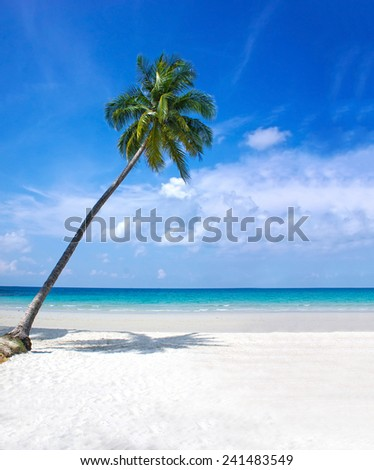 Tropical background; resort with a green lagoon and palm tree. Untouched tropical beach in Thailand - stock photo