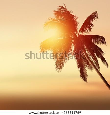Tropical background with coconut palm at sunset and ocean landscape - stock photo
