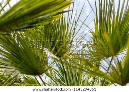 stock-photo-tropical-background-with-pal