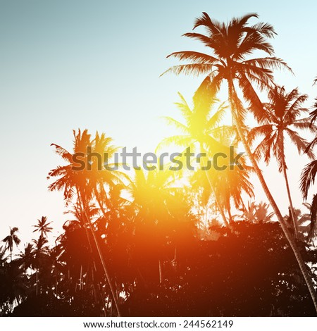 Tropical background with palm trees at sunset - stock photo
