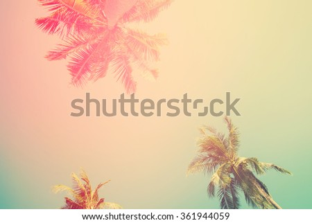 Tropical  background with palm trees in sun light. For Holiday travel design. Toned pastel effect - stock photo