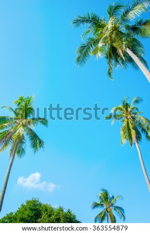 Tropical background with palm trees on blue sky. For Holiday travel design - stock photo