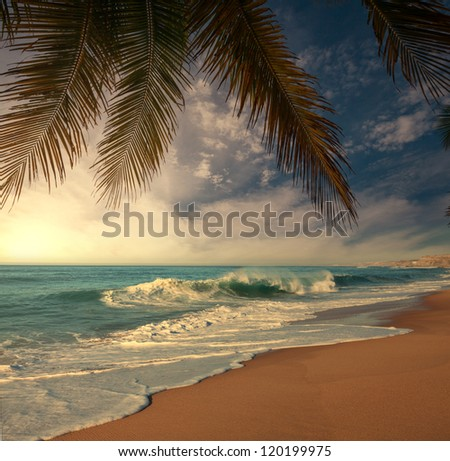 Tropical beach - stock photo